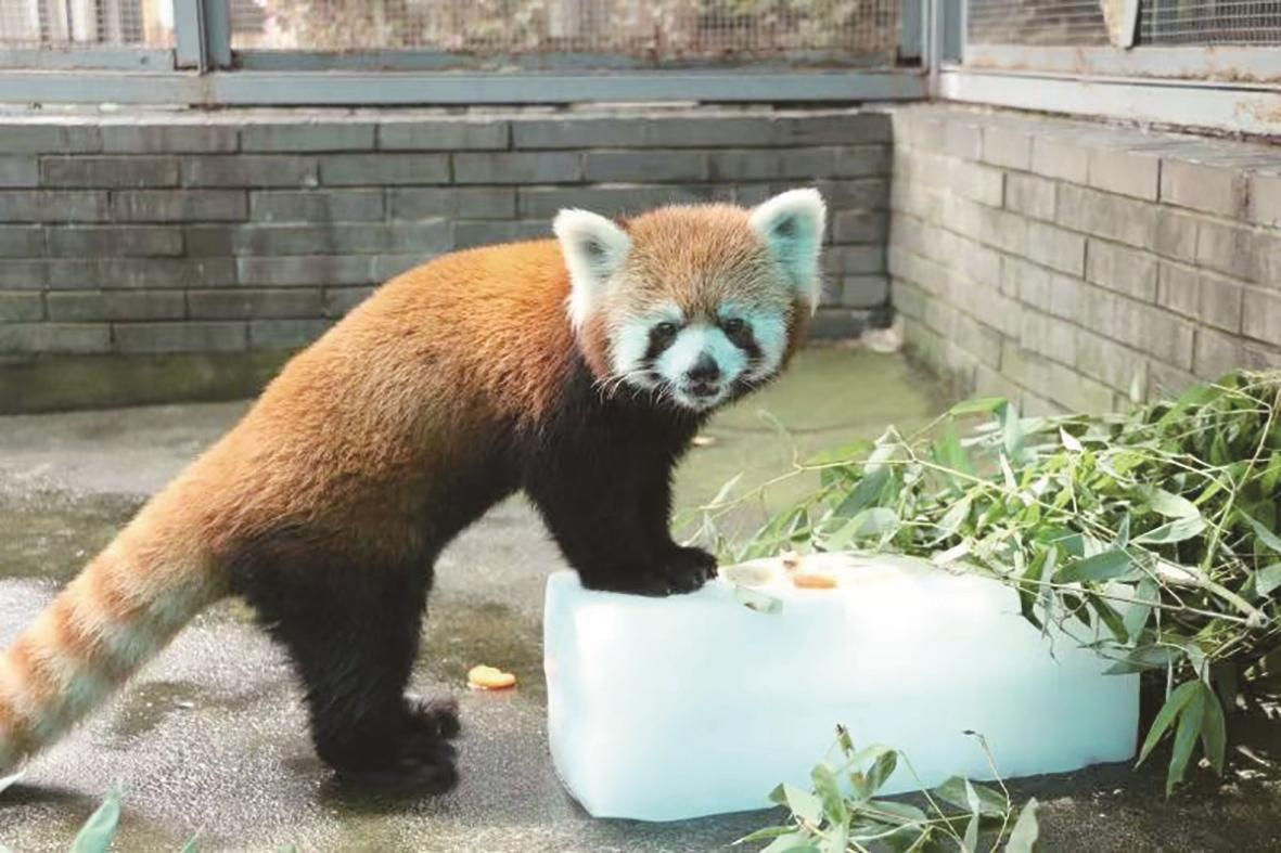 """動物解暑""""涼""""方多"""