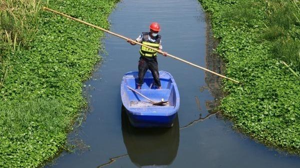 水清岸绿,塔子湖明渠变美了