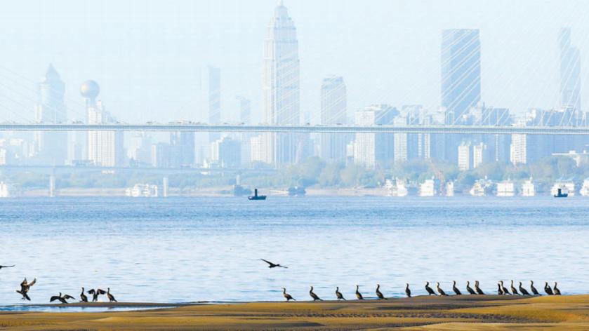 武汉将着力打造江滩湿地等9大花卉亮点片区