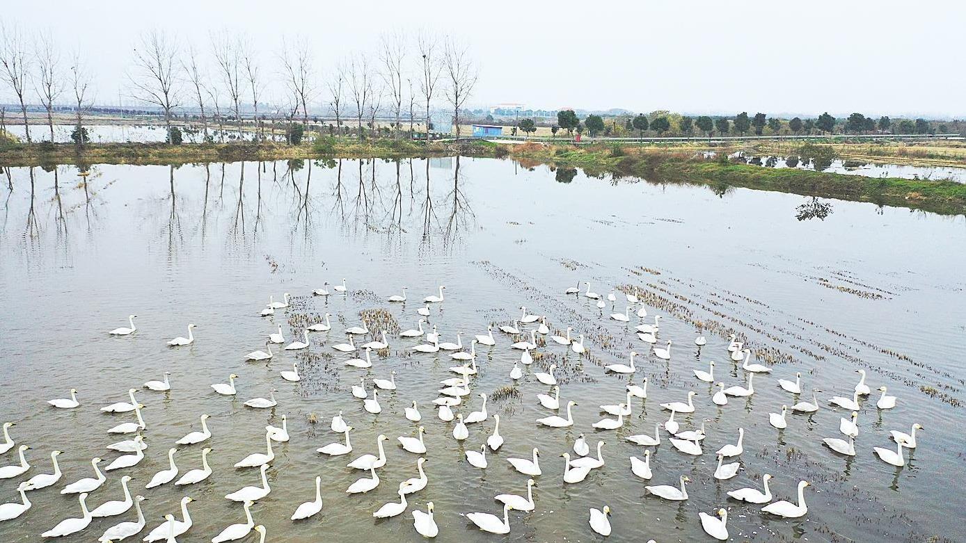 武汉城市圈内多地启动境内流域生态补偿