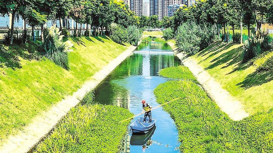 武汉塔子湖明渠水质达优良水平