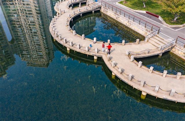 """武汉西北湖现""""水下森林"""""""
