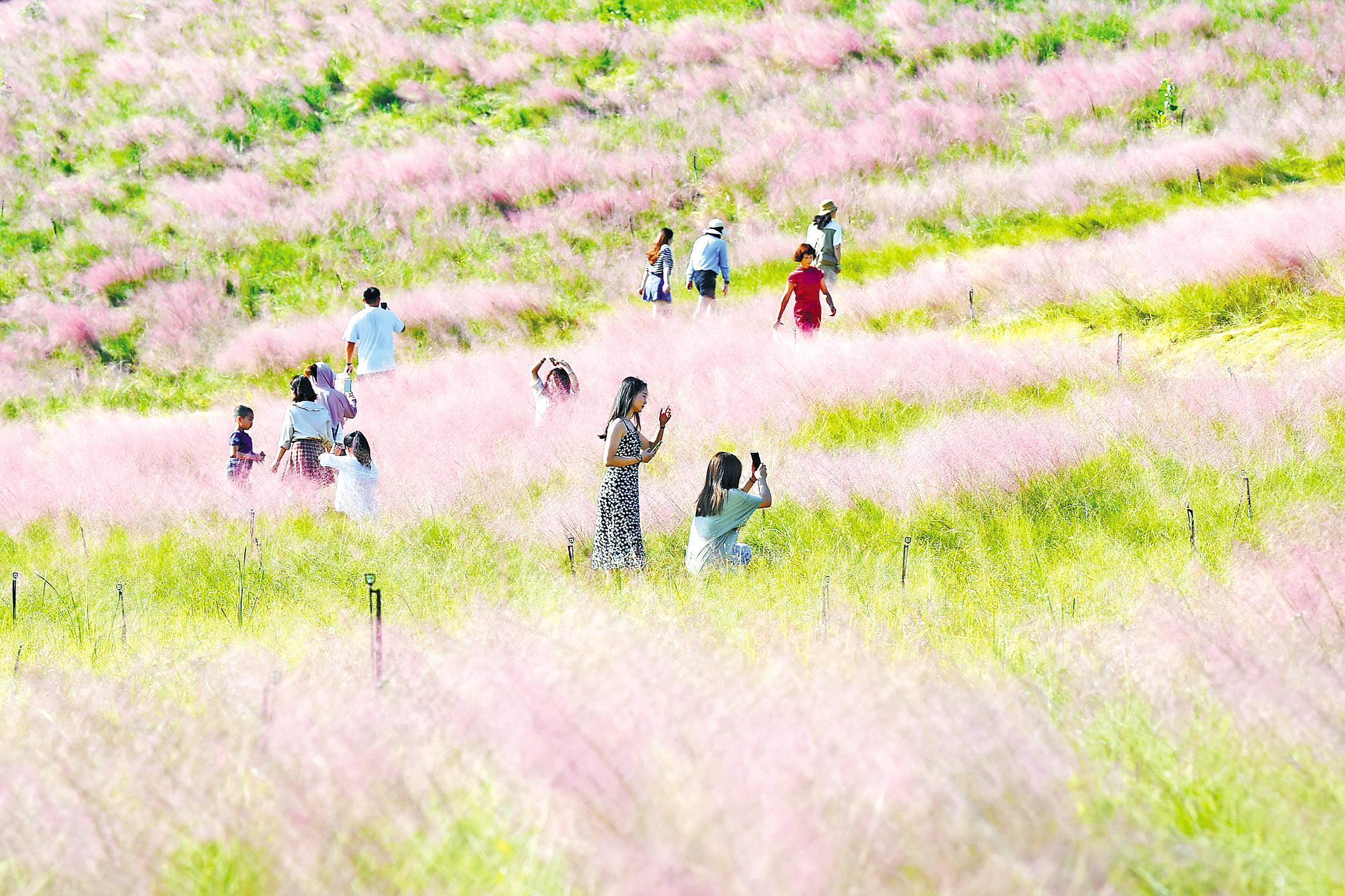 游客打卡光谷粉色花海