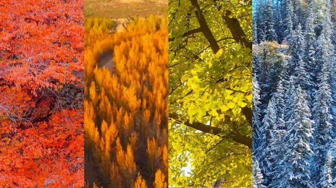 惊艳了整个秋天的渐变色