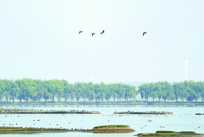 候鸟先头部队飞抵府河湿地
