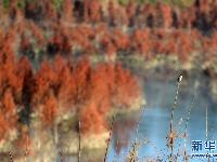 昆明:滇池上游湿地美如画