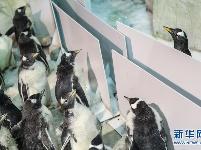 """小企鹅上""""幼儿园"""""""