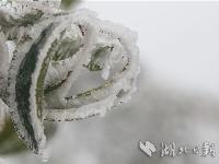 """美图:""""冰芯""""之恋"""