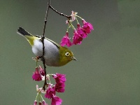红花春鸟共新景