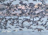 城中湿地 人鸟相安