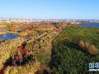 滇池湿地冬日美