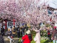 2019中国武汉东湖樱花节开幕