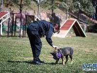 """中国首只克隆警犬正式""""入学"""""""