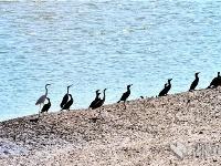 汉江湿地 鸟类乐园