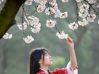 武汉一高校樱花盛开 女大学生化身汉服小姐姐花下
