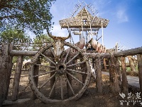 【新疆是个好地方】满地金黄!在中国最大沙漠里来一场邂逅