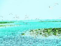 3万多只夏候鸟栖息洪湖湿地