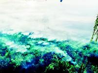 走访水生态修复现场  看武汉多个湖泊正在自然回归