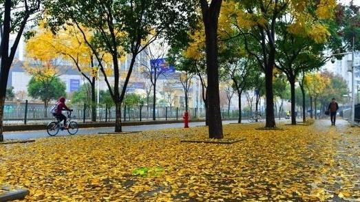 """让""""落叶飘一会儿"""",武汉这些公园延时清扫留住一地秋色"""