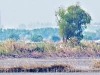 湿地家底丰厚 人与自然和谐  江城豪迈奔向国际湿地城市