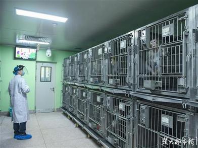 探秘武汉大学模式动物研究所,这里曾是抗击非典战场之一
