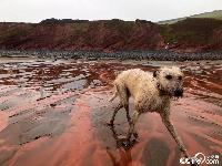 英国现血色海滩 海水一夜之间变红