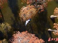 新洲涨渡湖湿地冬日美景