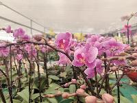 购花过新年,武汉花博园铺开10万平米迎春花市