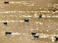听!武汉各个湿地里冬候鸟唱给春天的歌谣