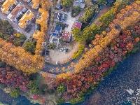 航拍冬日武汉东湖:层林尽染 色彩斑斓