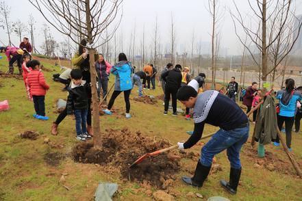 武汉19个义务植树点公布,4万株苗木等你来种,内附报名方式→