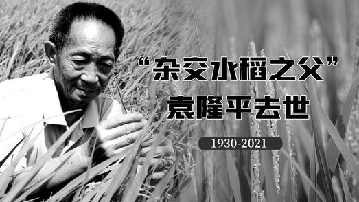 """""""杂交水稻之父""""袁隆平逝世"""