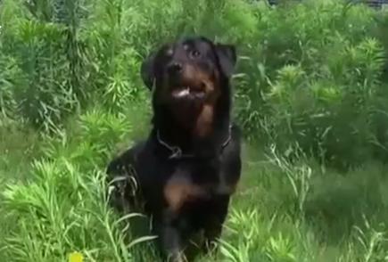 壯壯立功!警犬追擊嚇得酒駕司機乖乖就擒