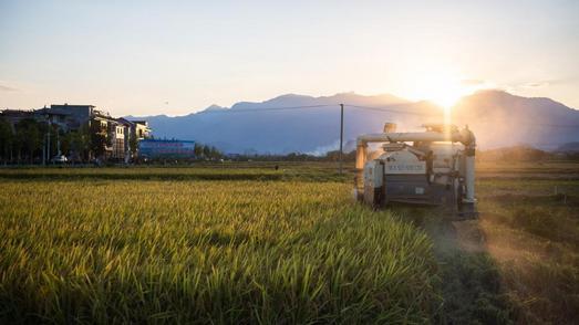 """中国农民丰收节:在""""万年稻种""""发现地看金色秋收"""